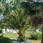 Le jardin, digne d'un des jardins de la Riviera Française