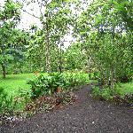Verdant grounds