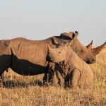 Mom & son rhinos