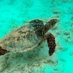 des tortues biensur
