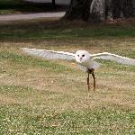 Fallowfields Falconry