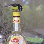 The birds like the Dutch syrup - too thick for me - tastes like molasses. I prefer good ole' Aun