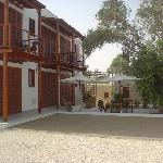 The courtyard with huge olive tree
