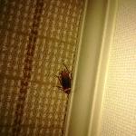 COCKROACH in my room