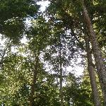 plenty of trees