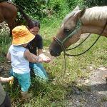 Nourrissant le cheval