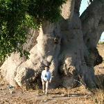 Un baobab veramente grande