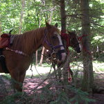 Adirondack Saddle Tours