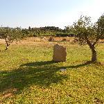 Gli ulivi e i menhir