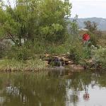 Tranquil fish pond