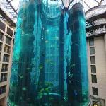 The fish tank