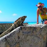 There are lots of Iguanas in Mexico