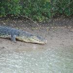 Crocs at Bhitarkanika