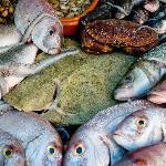 Lovely fresh fish