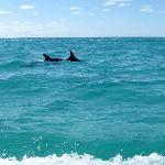 Wild Dolphins - Sian Ka'an