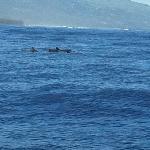 Safari baleines:0 baleine,15 dauphins