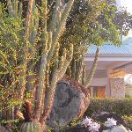 villa narjo végétation