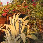 végétations à la villa narjo