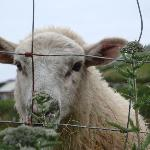 Local residents of Dingle Peninsula