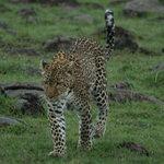 Leopard up close!