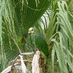 Im Garten kann man fast täglich kleine Schwärme von Papageien beobachten.