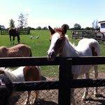 horses at clonfert
