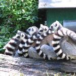 Lemur hug