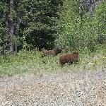 bears on the side of the road