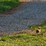 Shady River bunny!