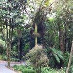 nikau palm in otari-wilton's bush
