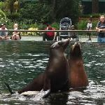 sea lions: a delight to watch (the only one unfortunately)