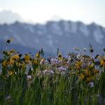 Wildflowers in back fields