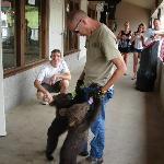 Feeding bear cubs