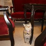 Isis, the hotel cat