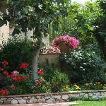 Beautiful flowers around the garden