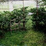 Petit jardin de la chambre