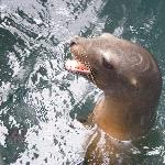 Donna the Sea Lion