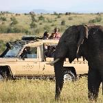 Sarova Mara Game Drives