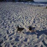 anatre sulla spiaggia
