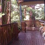 View across the private porch to the Bunya Pine