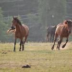all about the horses for us!