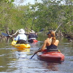Mangrove Kayak to the North Side