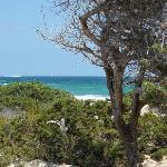 Pinien und Strand