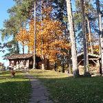 Autumn Colours in Park Beside the Cable Car near Gasthof Kohlern