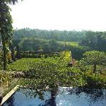 vistas a la selva desde la piscina