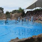 must see loro parque