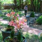 Garden, looking at Patio