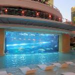 Aquarium and pool