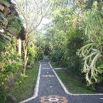 Enjoy the peace of our lush tropical garden