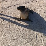 what is this seal doing on flAmenco beach